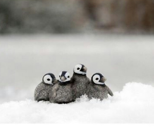 four, little, and penguin image