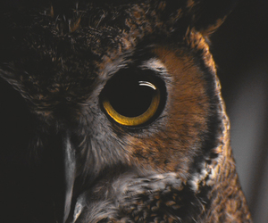 animal, owl, and bird image