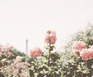 header, flowers, and pink image