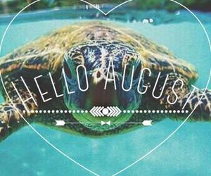 summer, turtle, and August image