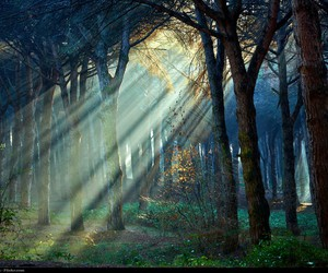 forest, trees, and daylight image