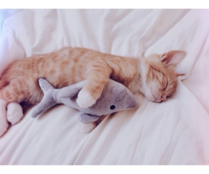 dolphin, kitten, and pure image
