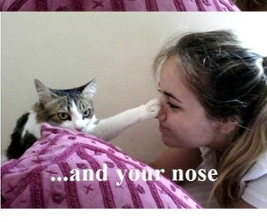 funny, cat, and lol image