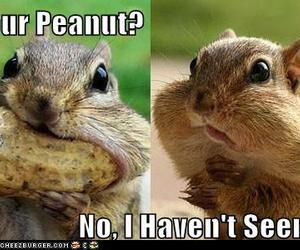 funny, peanut, and cute image