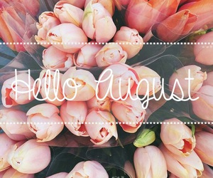 August, flowers, and orange image