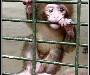 apes, baby animals, and monkey image