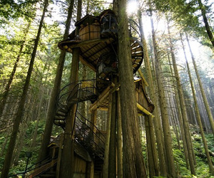 tree, treehouse, and forest image