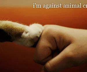 animal cruelty and animal rights image