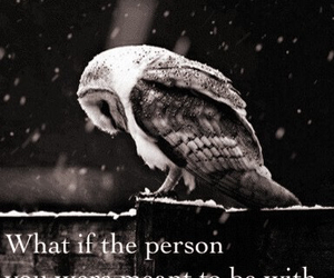 life, owl, and personal image
