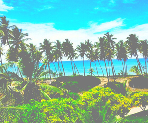 bright, palm trees, and summer image