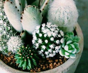 green, cactus, and succulent image