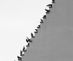 bird, black and white, and stairs image
