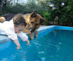 dog, baby, and pool image