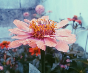 color, cool, and flower image