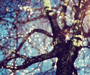 light, tree, and photography image