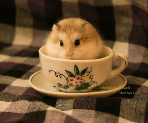 hamster, cup, and sweet image