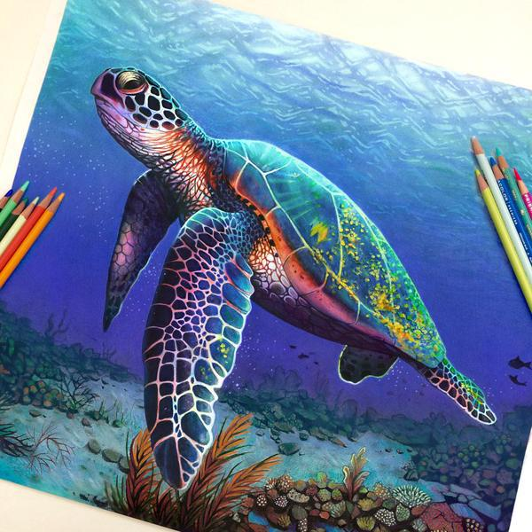 art, turtle, and drawing image