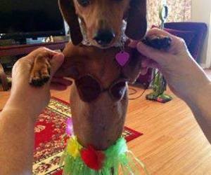 dog, dress ups, and funny image