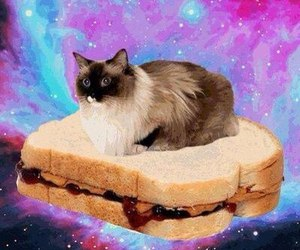 cat, sandwich, and galaxy image