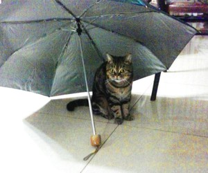 cat, umbrella, and gato image