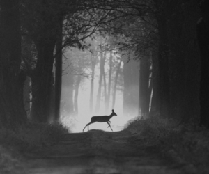 forest, deer, and animal image