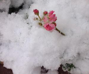 beauty, flower, and snow image