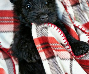 adorable, black, and animals image