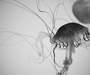 black and white and jellyfish image