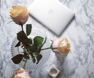 apple, vase, and computer image