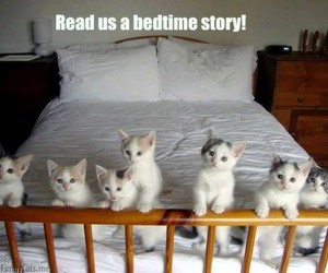 bedtime, funny, and kittens image