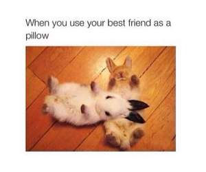 cute, bunny, and funny image