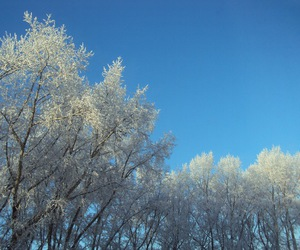 beauty, trees, and winter image