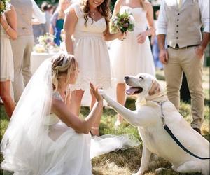 bride, couple, and dog image