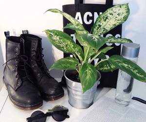 grunge, black, and plants image