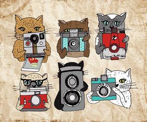 cat, camera, and photo image