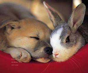 baby animals, cute animals, and rabbit image