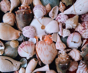 beach, shells, and summer image