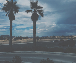 trees and tumblr image