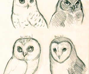 owls and awesome image