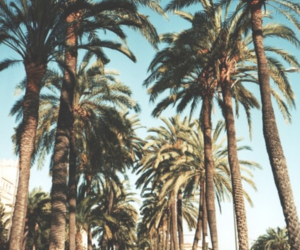 free, palm trees, and tumblr image