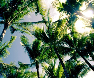 green, palm trees, and trees image