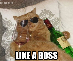 boss, bottle, and cat image