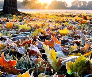 leaves, autumn, and frost image