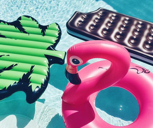 flamingo, pink, and vacation image