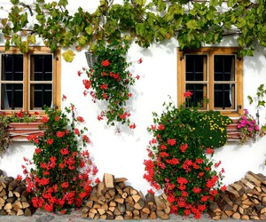 flowers and house image
