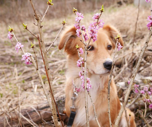 dog, finland, and flowers image