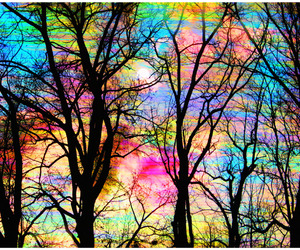 tree and colors image
