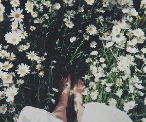 summer, tumblr, and ромашки image