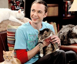 cat, cats, and sheldon image