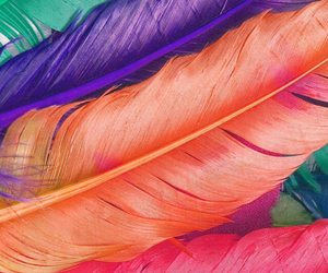 colors, feather, and green image